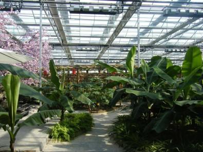 花卉溫室大棚